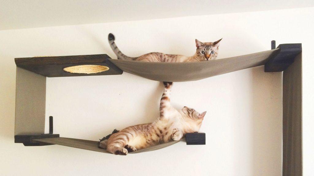 post-blog-caes-e-gatos-veterinaria-sorocaba-gatos-em-casa-apartamento-evitar-fugir