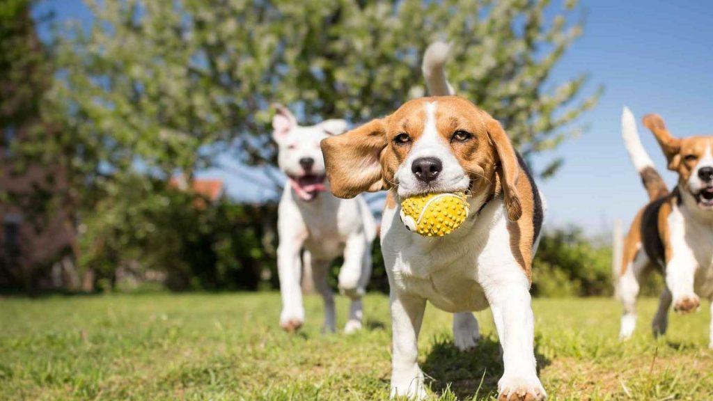 post-blog-caes-e-gatos-veterinaria-sorocaba-brincar-com-cachorro