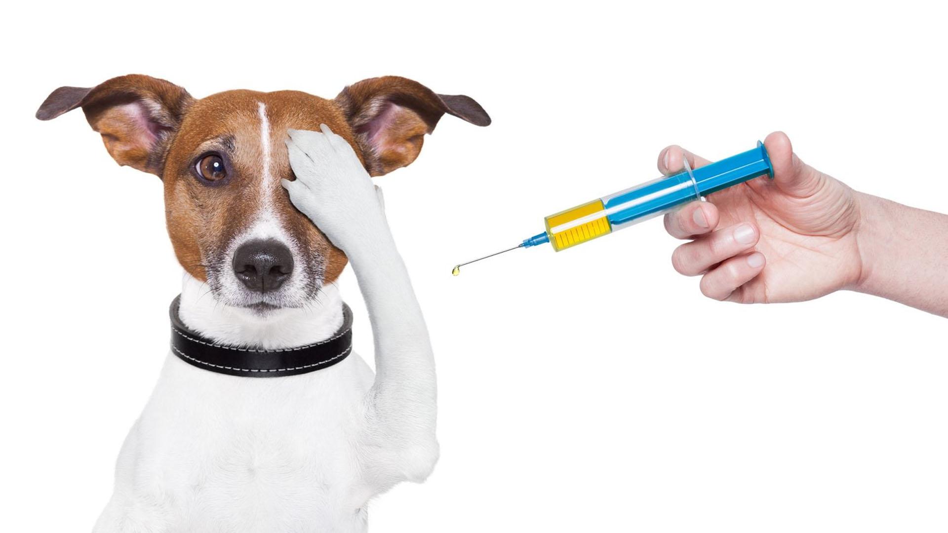 Quando começar a vacinar seu cãozinho?