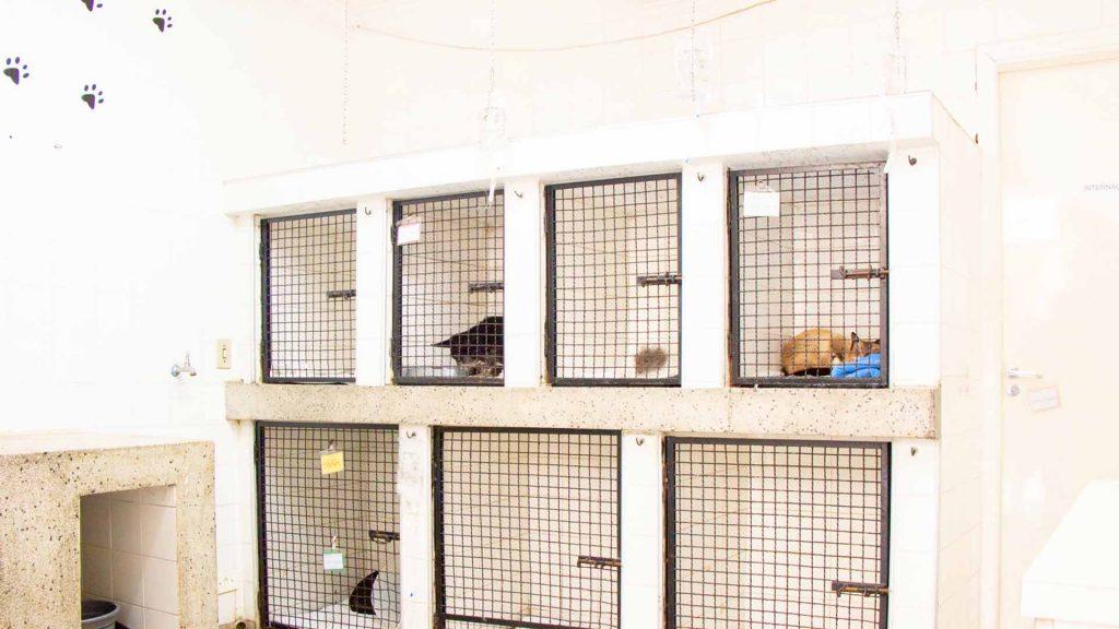 bg-internacao-home-caes-e-gatos-veterinaria