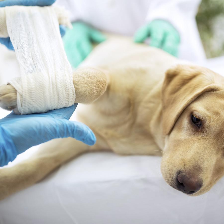 caes-e-gatos-veterinaria-emergencias